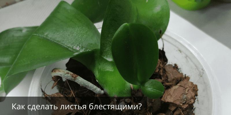 Как сделать листья блестящими